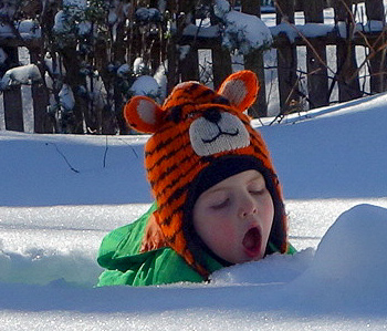 Alexander never met a snow bank that he didn't want to eat.